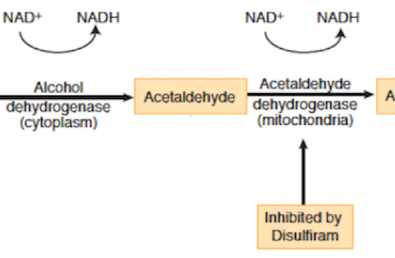 USMLE Step 1 stumper-acetaldehyde