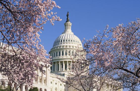 Washington D.C., Capitol Hill, Capitol Building, cherry blossoms